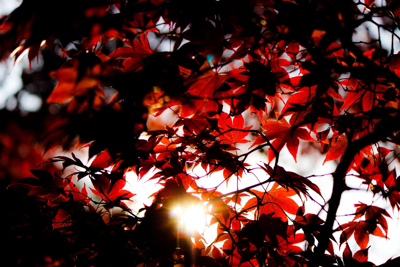 【第4回】鎌倉の未来について考え、行動するためのワークショップ〜共創アイデアを探索する